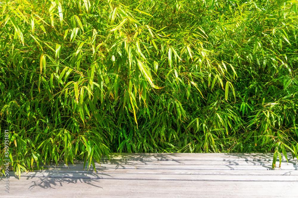 üppiger bambus und holz
