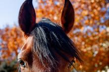 Close-up Of A Cute Brown Mule ...