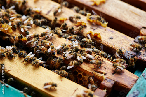 Photo Apiary, beehive farm and beekeeping