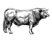 Graphics Illustration Farm Animals Obrak Bull Maker