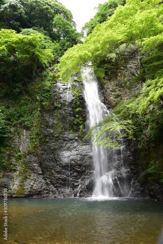 Fototapeta 五月の滝と緑 obraz na płótnie