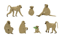 Set Of Females And Males Of Yellow Baboons Of Different Ages. Papio Cynocephalus. Animals Of Africa. Realistic Vectors Are Not Animals.