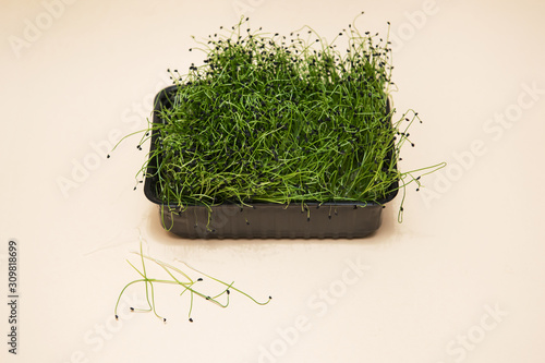 Micro greens sprouts of amaranth on beige background Wallpaper Mural