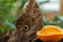 Close-up Of A Butterfly Eating...