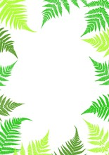 Frame Of Fern Leaves. Botanica...