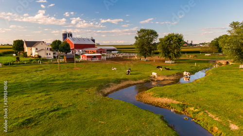 Cattle grazing in front of traditional American farm, Pennsylvania countryside f Fototapeta