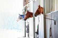 Pferde Schauen Im Stall Aus Der Box