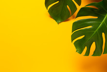 Two Monstera Leafs Isolated On Orange / Yellow Background, Top View