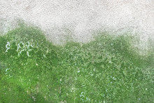 Wall With Mold And Moss