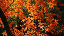 日本の秋 紅葉風景