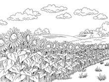 Sunflower Field Graphic Black ...