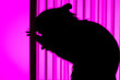 canvas print picture - concept photography pest rodent protection.  Rodent rat trying to get out of the cage standing on its hind legs. Silhouette in the backlight with a background color Magenta.