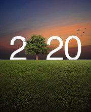 2020 With Tree On Green Grass ...