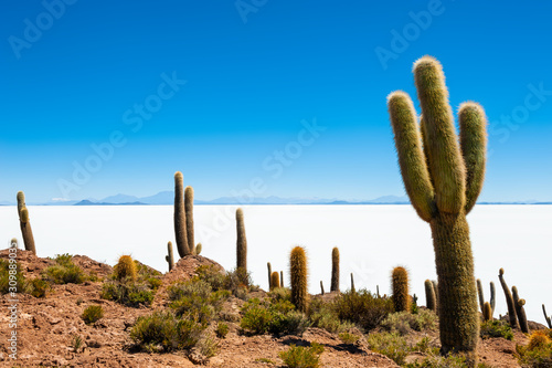 Big green cactuses on Incahuasi island, Salar de Uyuni salt flat, Altiplano, Bolivia Wallpaper Mural