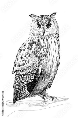 Hand drawn owl, sketch graphics monochrome illustration Fotomurales
