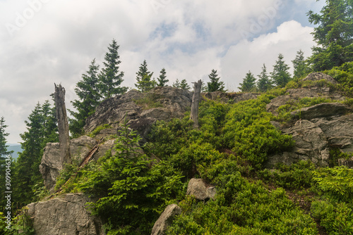 Obraz na plátně  rock with smaller trees and blue sky with clouds on Medvedi vrch hill in Jesenik