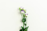 Composition with violet eustoma flowers on white background