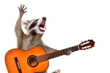 Portrait Of Funny Singing Racc...