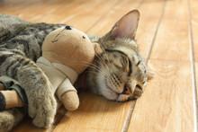 Cute Tabby Cat Is Sleeping And Hugging Bear Doll.