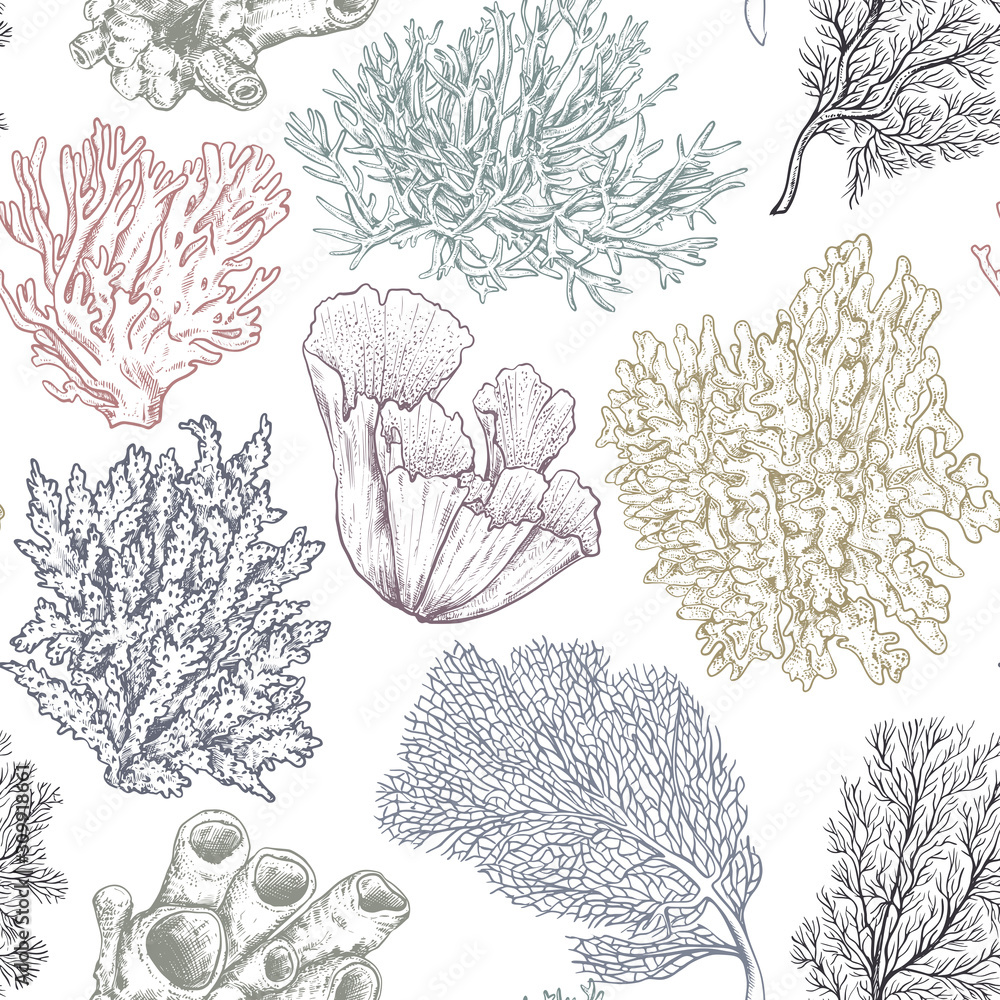 Fototapeta Vector seamless pattern with hand drawn ocean plants and coral reef elements in sketch style.