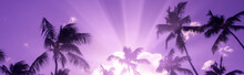 Silhouette Of Coconut Palm Tre...