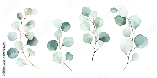 Fototapeta Watercolor floral illustration set - green leaf branches collection, for wedding stationary, greetings, wallpapers, fashion, background. Eucalyptus, olive, green leaves, etc. obraz na płótnie