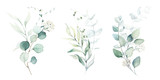 Fototapeta Kwiaty - Watercolor floral illustration set - green leaf branches collection, for wedding stationary, greetings, wallpapers, fashion, background. Eucalyptus, olive, green leaves, etc.