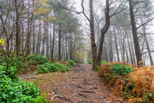 Path Through A Woodland With T...