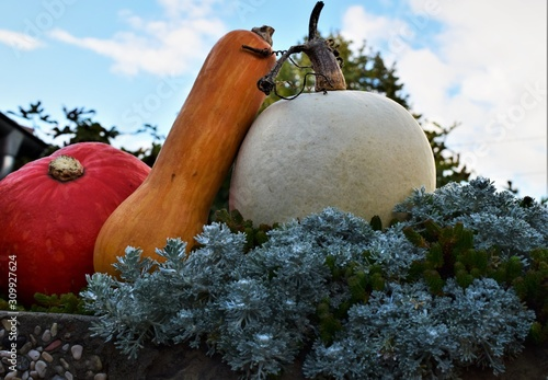 Obraz pumpkin with leaves and flowers on green background - fototapety do salonu