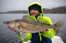 Angler With Huge Winter Zander