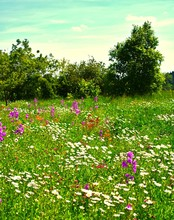 Blumenwiese Am Waldrand