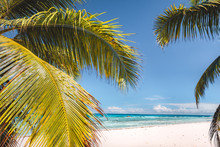 Palm Tree Leaves Against Tropical Sandy Beach And Blue Ocean. Travel Tourism Concept