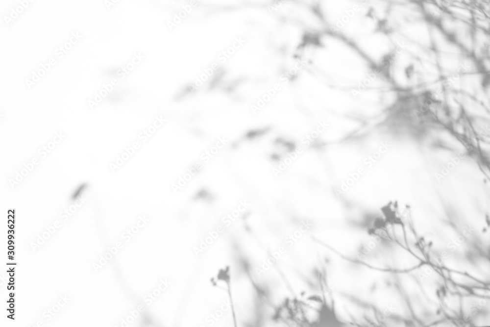 Fototapeta Overlay effect for photo. Gray shadows of the tree brunches on a white wall. Abstract neutral nature concept background