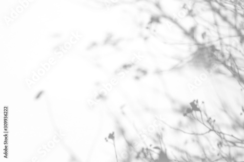 Obraz Overlay effect for photo. Gray shadows of the tree brunches on a white wall. Abstract neutral nature concept background - fototapety do salonu