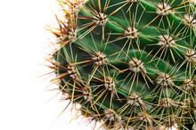 Macro Cactus Thorns