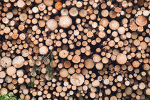 Pile Of Chopped Down Logs
