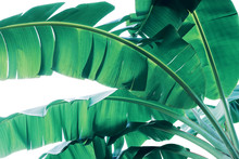 Tropical Green Leaves Pattern ...