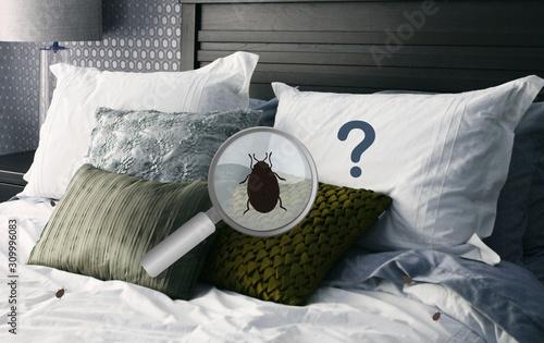 Fototapeta Détection et recherche et identification des  punaises de lit