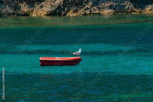 Möwe Kroatien Bisevo Boot Ruder Silbermöwe rot türkis Mittelmeer Adria klar Fisc Canvas Print
