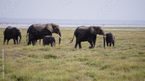 herd of elephants Wallpaper Mural