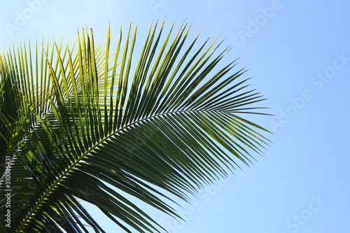 Photo palm tree on background of blue sky