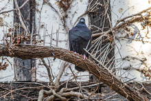 A Pigeon Perched Between Deter...