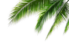 Tropical Beach Coconut Palm Tr...