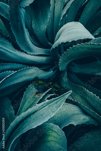 abstract agave close up Canvas Print