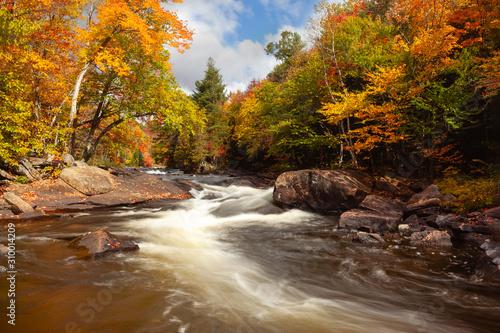 Photo A rushing stream through fall foliage in Algonquin, Ontario, Canada
