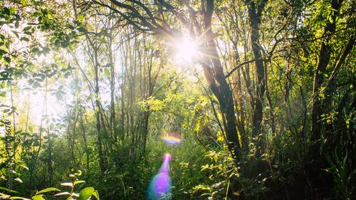 Luz do sol na floresta Canvas Print