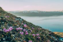 Wildflowers On Coast