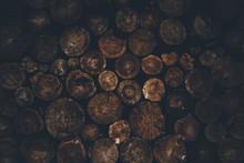 Logs, Full Frame