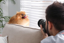 Professional Animal Photograph...