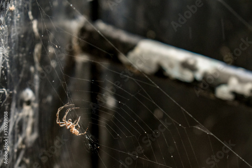 Spider Wallpaper Mural